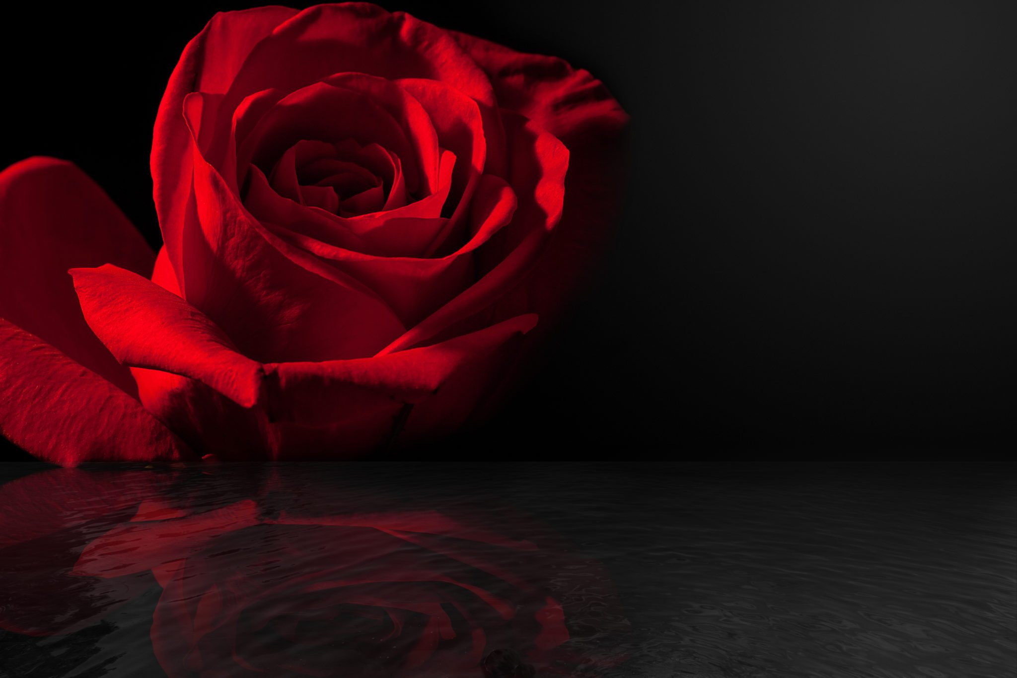 Red rose with reflection at edge of water with subtle ripples. Room for copy for love or sympathy card